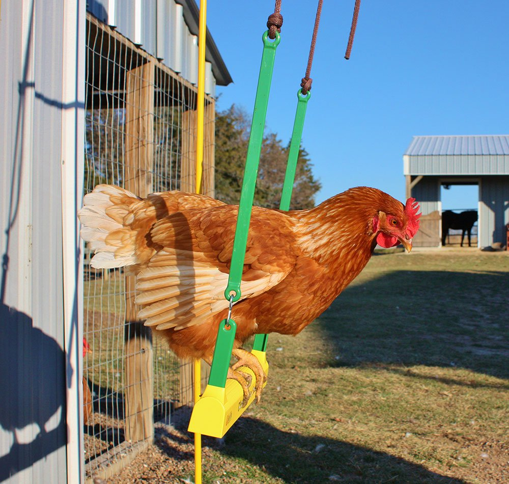 Supplies Fencing Chicken